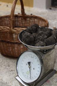 Pesée des truffes